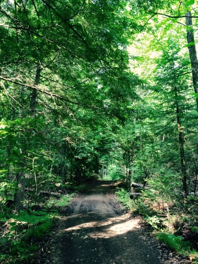 The access road to the cabin.
