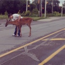 The Deer on the Road