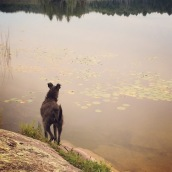 Lewis enjoying some off-leash time at the cabin. Still thinks the water is a giant black hole that is going to swallow him.